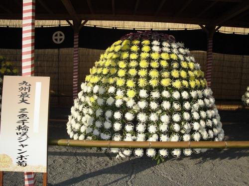H17 磯菊祭りです