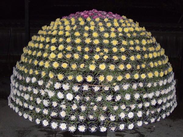 H18 磯菊祭りです 夜間入園しました
