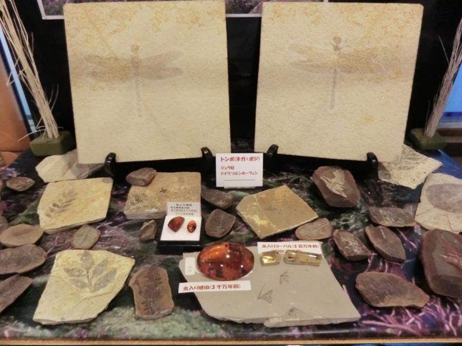 H25.7月、昆虫化石 トンボはネガポジの絶品です